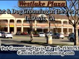 Dog Grooming-Grooming for Pets-Grooming for Cats Davis CA