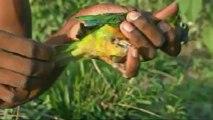 Amazonia, última llamada (07) Precio a la vida