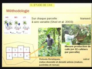 08/09/2011 : Compromis entre production et biodiversité arborée dans les agroforêts à café / N. Lamanda