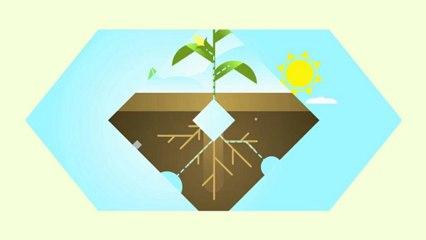 La Photosynthese