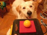 erko et le jeu intelligent pour chiens trixie dog activity