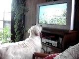 enee regarde la télé