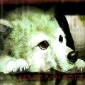 Wolf's Rain - Tell me what the rain knows
