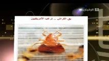 مكافحة حشرة الفراش 0549656294 مكافحة حشرات . رش مبيدات بالرياض