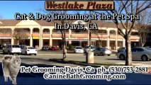 Cat Grooming-Grooming for Pets-Grooming for Dogs Davis CA