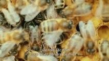 Ep 07: Planète Orange à Caen : let it bee, des abeilles sur nos toîts