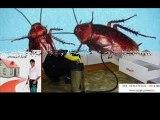 شركة مكافحة حشرات بالضمان 0506071722 شركة الشهيد رش مبيدات حشرية