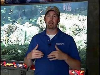Florida Aquarium Part 2