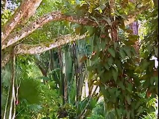 Naples Zoo at Caribbean Gardens Part 2