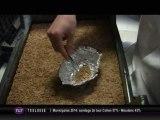 Entomophagie : Manger des insectes comestibles (Toulouse)