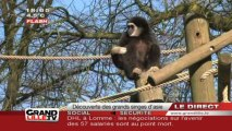 Lille: découverte des grands singes d'Asie