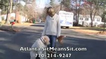 Atlanta Dog Obedience Training - Sit Means Sit - Murphy