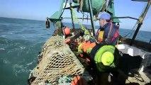 Pêche à la coquille : une journée en baie de Chausey