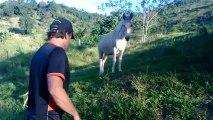 Zé dos burros... Dois burros não se encaram.... Quarenta anos de burro...