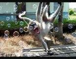 월드카지노 ♥♥♥♥♥♥♥♥♥ Qch138.com ♥♥♥♥♥♥♥♥♥ 와와카지노