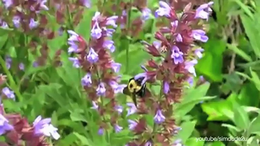 How Do Bees Know Which Flowers Have More Nectars