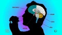 Alcohol y cerebro adolesente: Elsa Punset