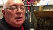 SIA 2013 : Les moutons d'Ouessant, plus petites tondeuses écologiques