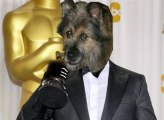 Un chien très con II - Le retour