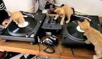 3 chats aux platines