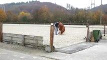 Gerber Quarter Horses, Kaiseraugst, Home of Shotgunner, Performance Horses