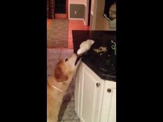 L'oiseau et le chien