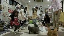 ´Cat cafés` reúnem gatos e amantes de felinos em Tóquio