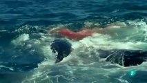 Gigantes del mar 1 Vidas gigantes
