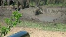 Fun dans le bain de boue Hluhluwe Umfolozi avec premier rôle pour bébé éléphant -