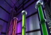 Algae gobbles greenhouse gases