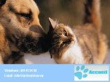 Toilettage pour chiens pension pour chiens Bertrix 6880