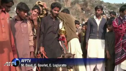 Perros pelean a morir en Punjab