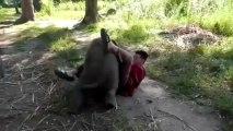 Un éléphanteau qui demande les calins