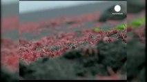 Marée rouge au Chili