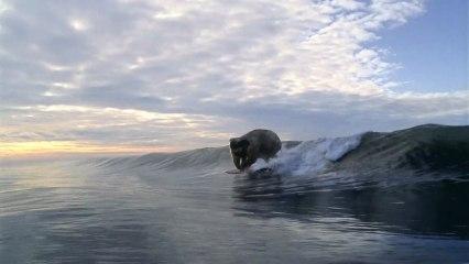 ÇA FAIT QUOI UN ÉLÉPHANT SUR UNE PLANCHE DE SURF ?