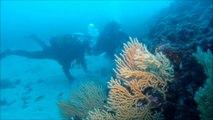 plongée : les 2 freres CSAM 22 mars 2013