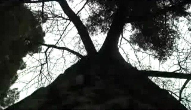 El árbol que sobrevivió a Hiroshima y Nagashaki