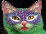 peinture sur chats