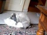 une lapine se prend pour un male oO