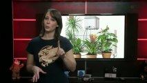 Gadgets for Gardening and Plant Care - GeekBeat.TV