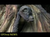2nd Dead Alien body found at UFO sightings hot spot Russia 2013_ by UFOvni NEWS