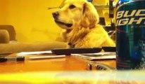 a mi perro le gusta la musica
