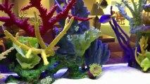 Jacksonville, FL. Aquatic Care, Aquarium Maintenance 904.588.2700 Jacksonville, Florida.