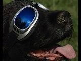 10 Unusual Pet Inventions