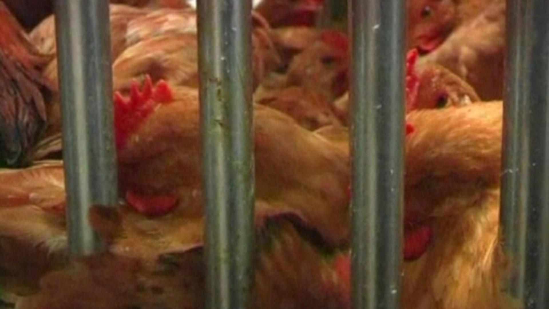 New bird flu virus adds to China health fears