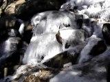 Chutes des cascades