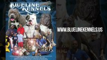 "Blue Line Kennels Presents ""Beats & Bullies"" Documentary-Dvd Teaser starring Kurupt, Daz Dillinger, Wiz Khalifa, E-40, Terrace Martin & Snoop Dogg"
