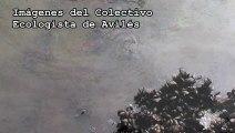 Ecologistas denuncian vertido en la ría de Avilés. Asturias