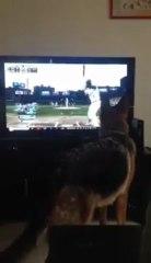 Un chien à fond dans un match de baseball !