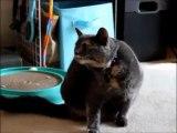 Chat qui se gratte avec une patte fantôme